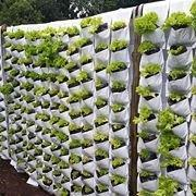 2-VOF-wall-growing - Copy